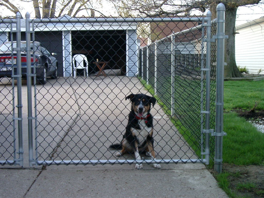 chain link fence double gate. Galvanized Chain Link Double Drive Gate Fence